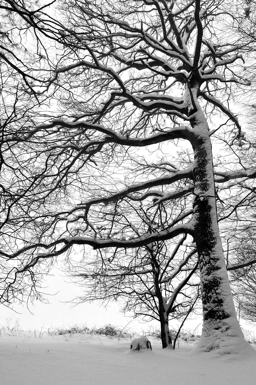 stromhl1e