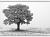 strom1e